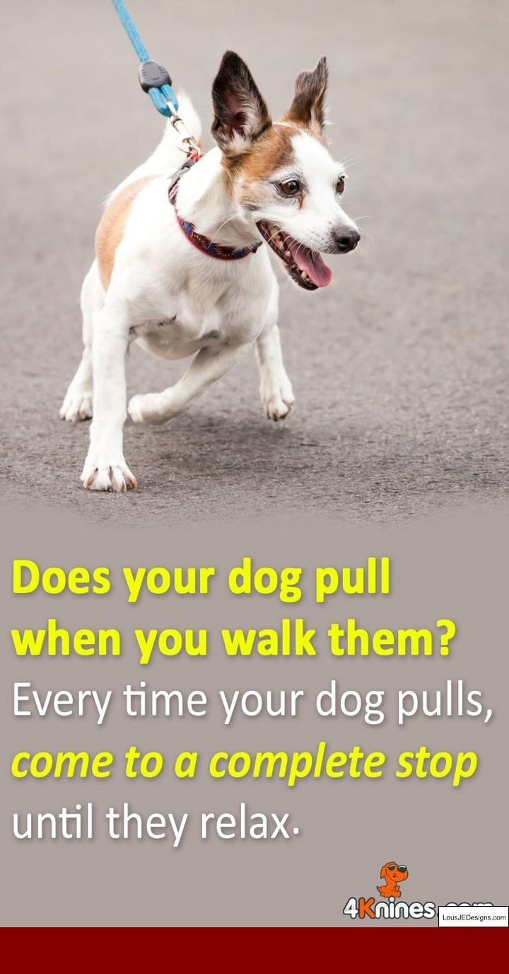 Most Individuals Fall Short At Dog Training Considering That They