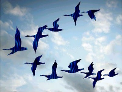 Wild Geese Flying Formation
