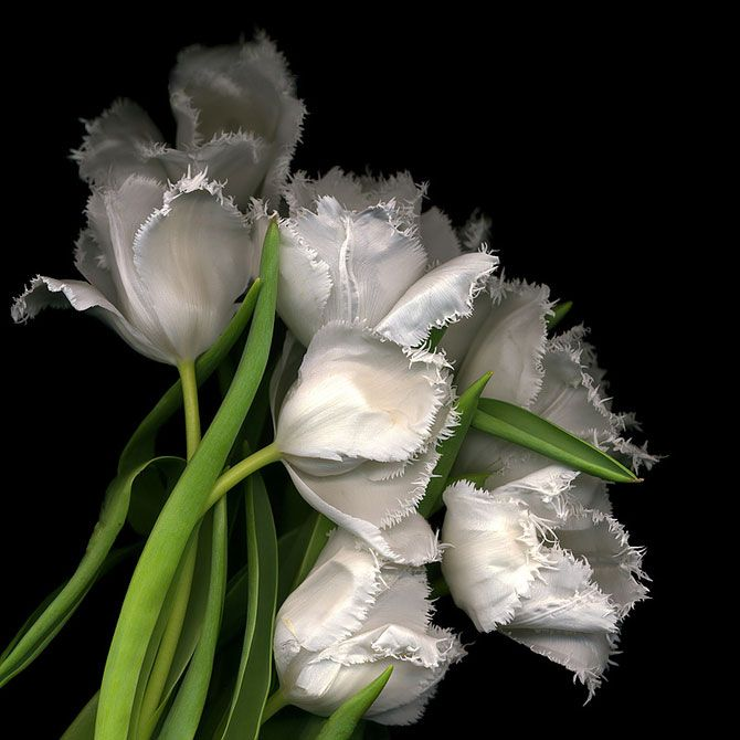 Poza 1 - 15 fotografii superbe cu flori, de Magda Indigo