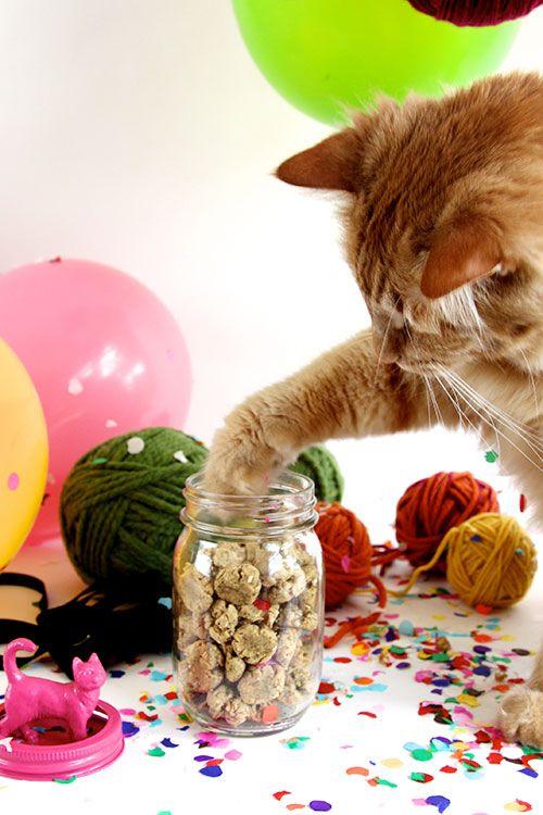 In The Kitchen With Joy The Baker S Crunchy Cat Treats Diy Cat Treats