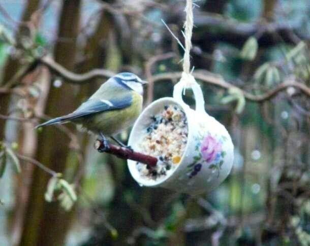 Les 309 meilleures images propos de oiseaux birds sur for Les petits oiseaux