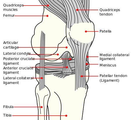 https://en.wikipedia.org/wiki/Anterior_cruciate_ligament_injury