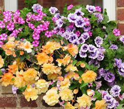 Las 25 mejores ideas sobre jardin express en pinterest for Jardin express