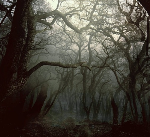 There are few things I love more than a misty forest