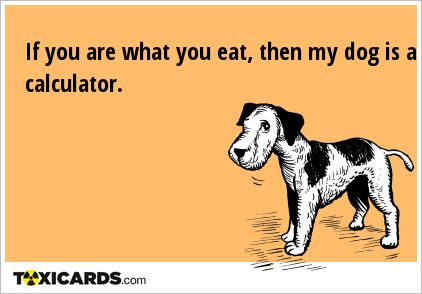 If you are what you eat, then my dog is a calculator.