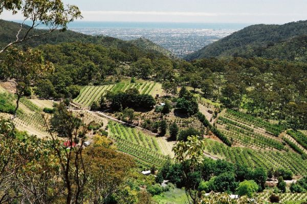Natural Resources Adelaide and Mt Lofty Ranges - Natural Resources Management Board