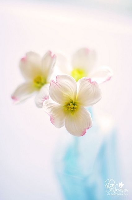 dogwood3set3 by dkdesigns, via Flickr