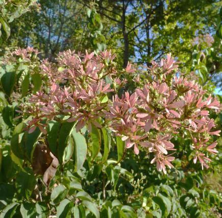 18 best trees shrubs images on pinterest flowers garden fruit trees and garden trees - Planting fruit trees in the fall a garden full of vigor ...