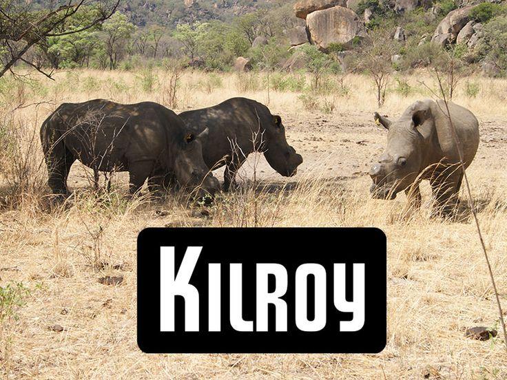 Kilroy, Anbieter für Reisen aller Art