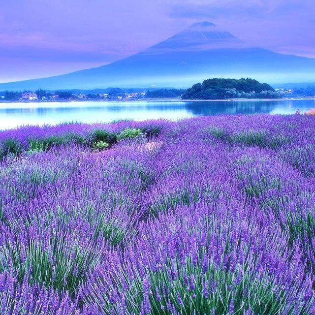 2年前の大石公園ラベンダー畑と富士山の風景残念ながら今年はタイミングが合わず #富士山 #fujisan  #team_jp_ #japanfocus #IGersjp #world_capture #wu_asia #Top_ #INSTA_CREW #world_union #wu_japan #photolabo_jp #ig_exquisite #igs_asia #igs_world #ig_today  #gununkaresi
