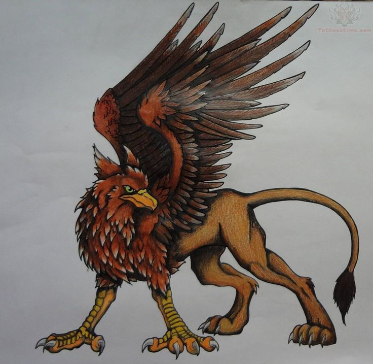 Griffin Tattoo Design For All