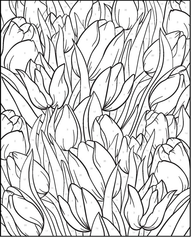Creative Haven FLORAL DESIGNS PAINT BY NUMBER  by: Jessica Mazurkiewicz -  Dover Publications COLORING PAGE 4