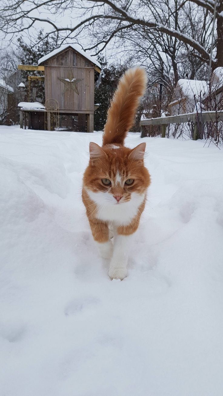 Our Simba loves snow! by deWaalflower cats kitten catsonweb cute adorable funny sleepy animals nature kitty cutie ca