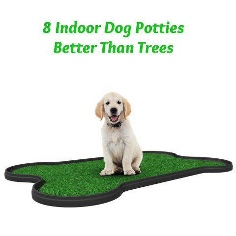 Need a great indoor dog toilet? If you want to have the option of having your dog go inside the house, there are some really good indoor toilet options now available. Here are my top 8 picks for dog potties that are better than trees... see more at InventorSpot.com