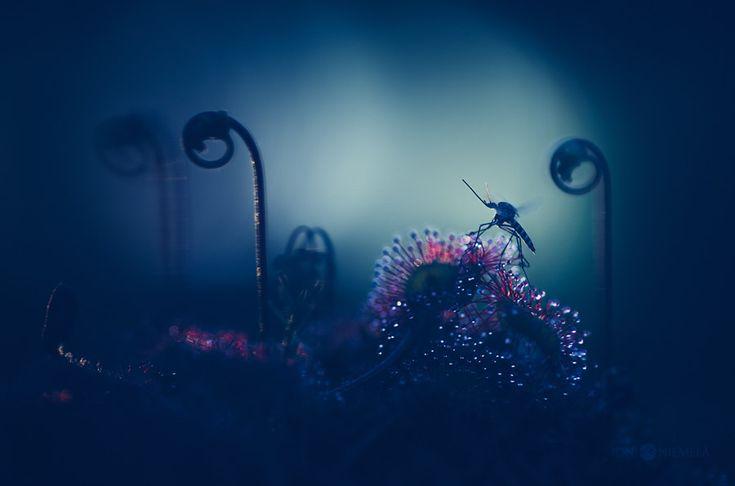Beautiful Fine Art Nature Photography by Joni Niemela
