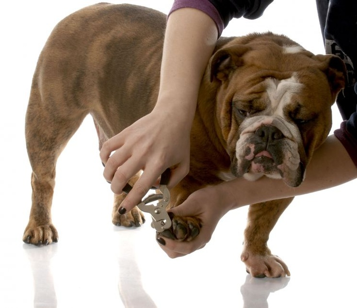 how to cut really long dog nails safely