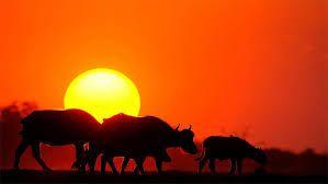 Resultado de imagem para imagens do fundo animais africa