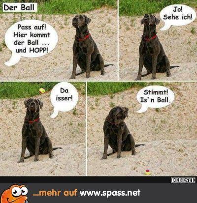 Ein Hund, zu cool für Ballspiele