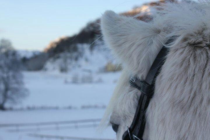 Beatuiful horse