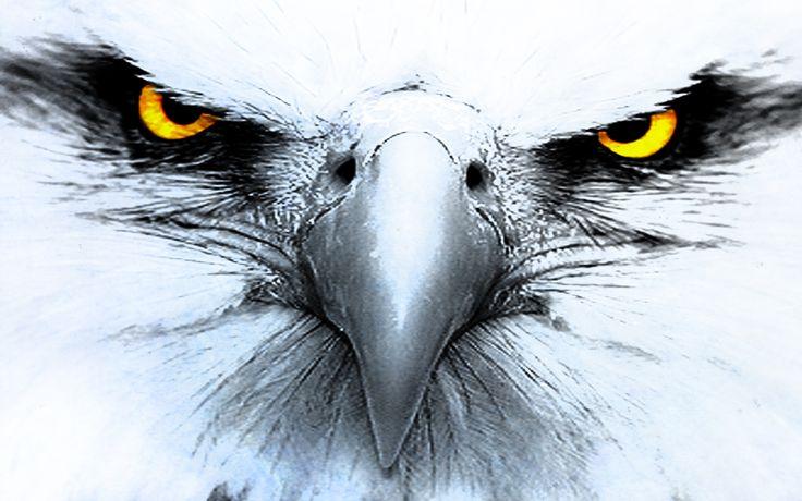 Animal Eagle Bird Art Design wallpaper by sophiaLane ...