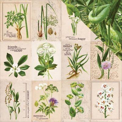 "Kaisercraft - Botanica 12x12"" d/sided scrapbooking paper - Habitat | www.auntyverascrapandcraft.com.au"
