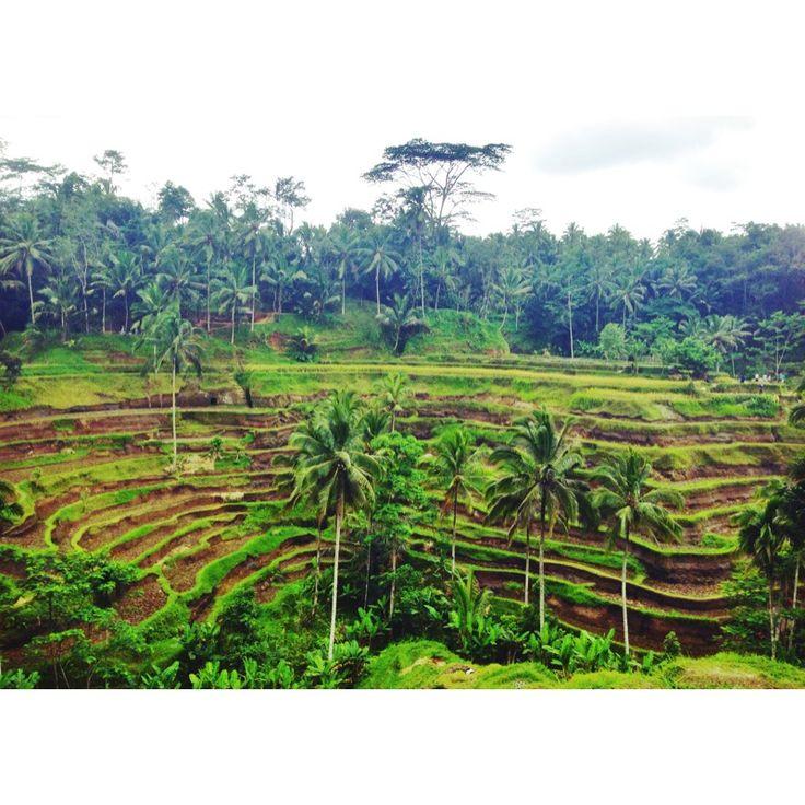 #bali #riceterraces #tegalalang