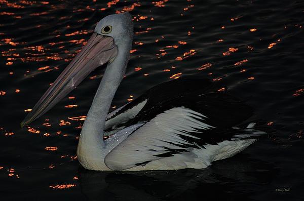 http://fineartamerica.com/featured/pelican-at-night-cheryl-hall.html