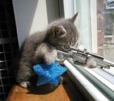 snipper cat : don't mess with me... I warned the stupid dog across the street !