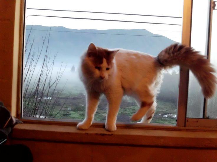 neblina y gato :)