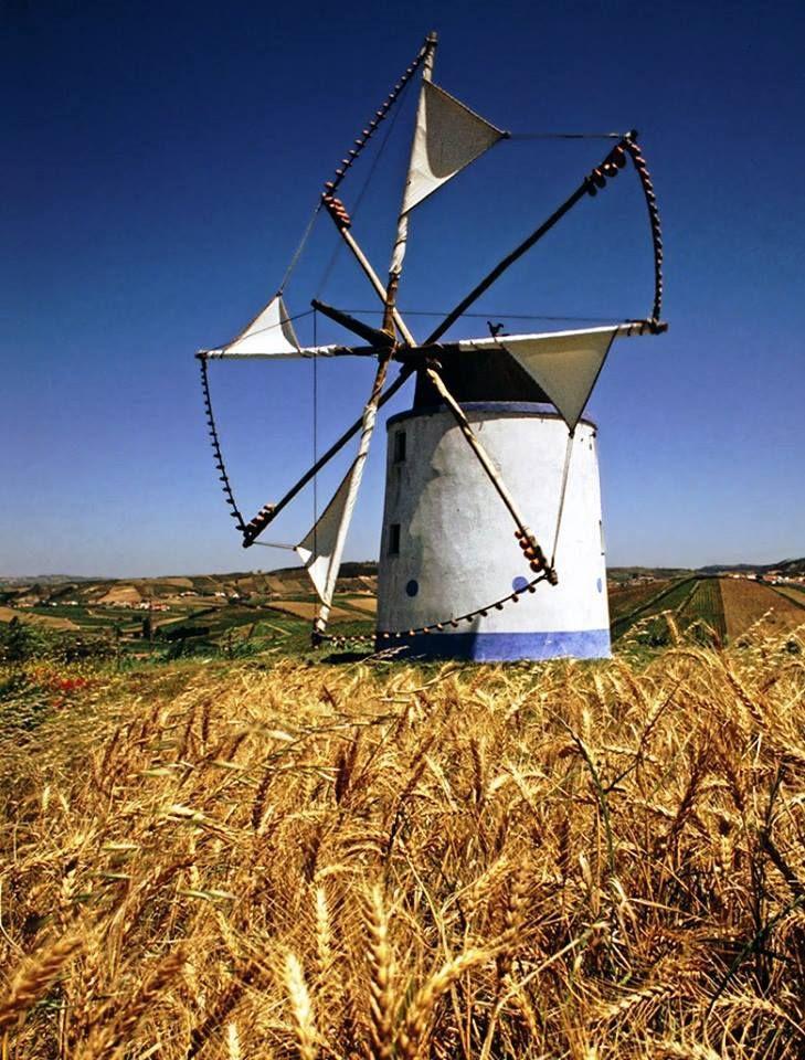 Alentejo windmills and wheat plantations - #PORTUGAL