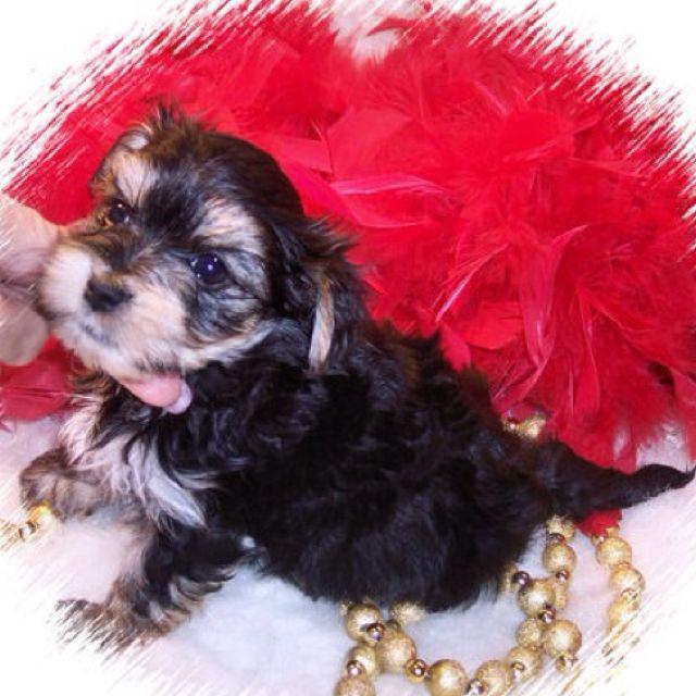Emma's puppy!