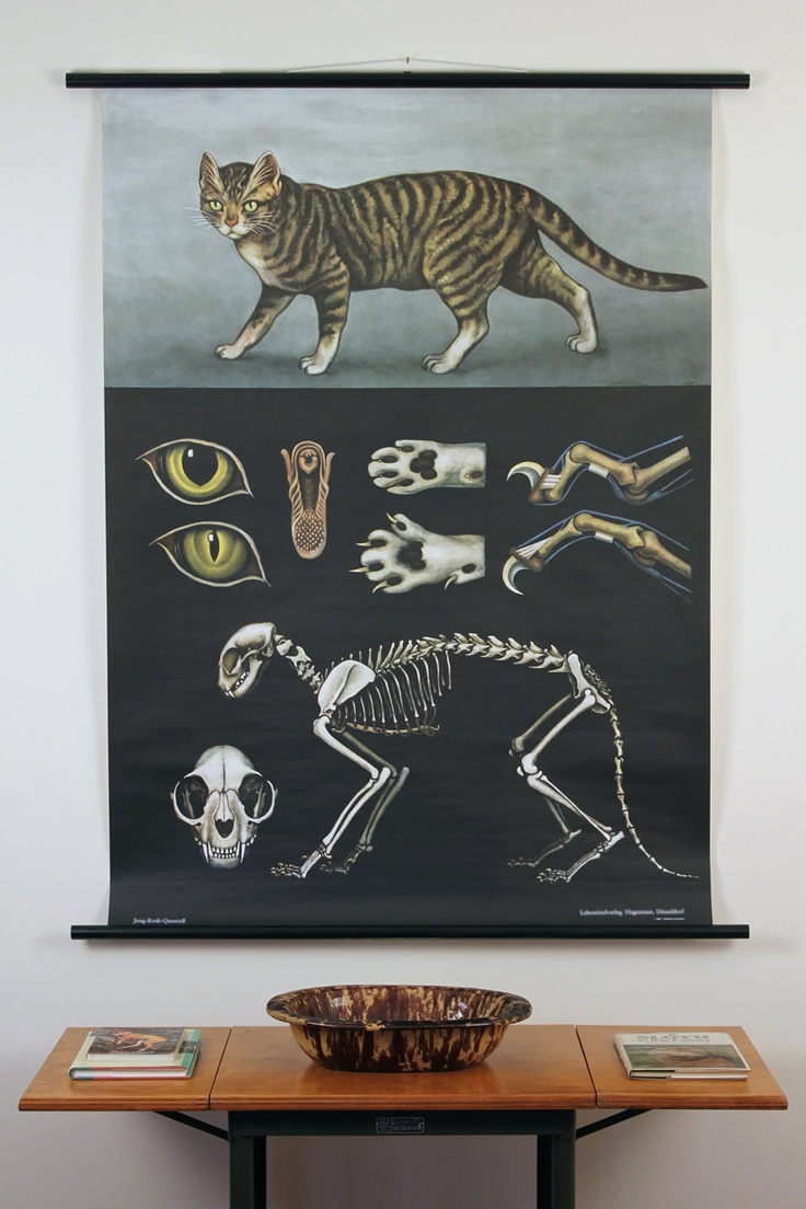Zoology poster design - Domestic Cat Zoological Wall Chart Design By Empirical Style
