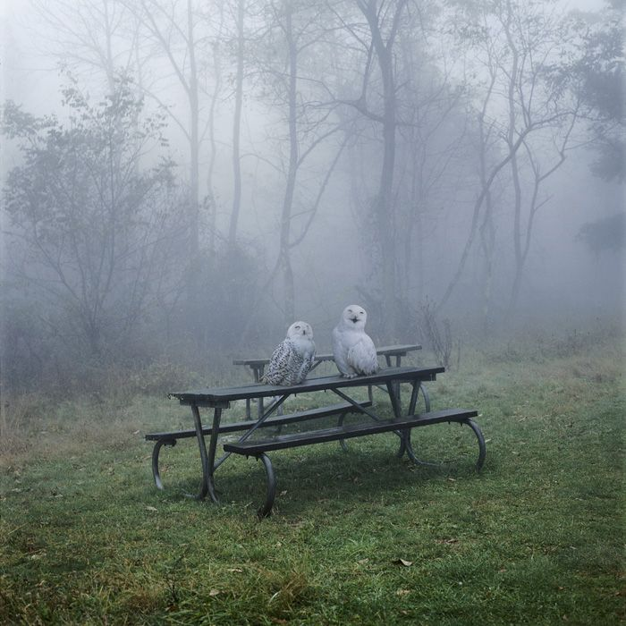 Owl Picnic  photo: Simen Johan