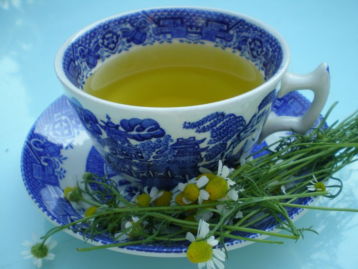 """Chamomomile tea - one of many herbal teas you can grow in your own garden. Our stand at RHS Tatton 2015 is entitled """"Thyme for Tea"""". Read more about our preparations for the show on the Herb Society blog."""
