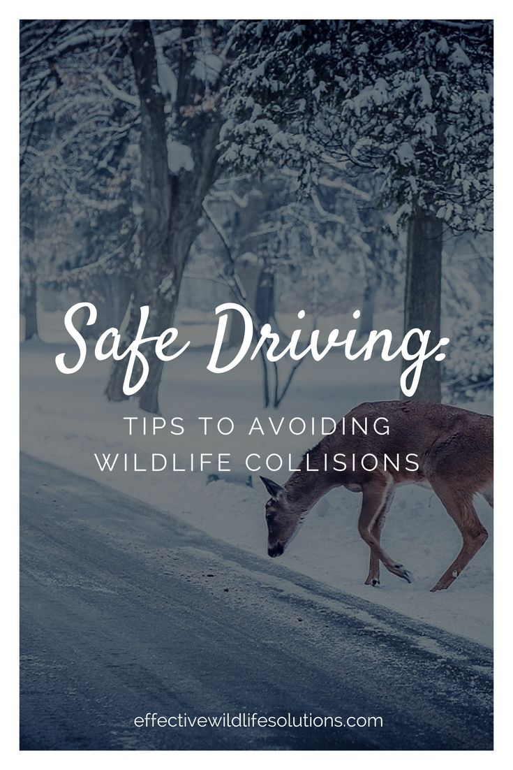 safe driving tips 1200 new jersey avenue, se, west building washington dc 20590 usa 18883274236 tty 18004249153.