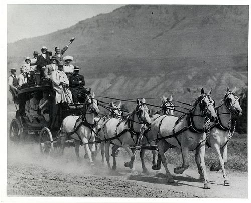 old people driving draft Find draft horses and other heavy work horses for sale on equine now these horses are usually put to work plowing fields or pulling carts and carriages.
