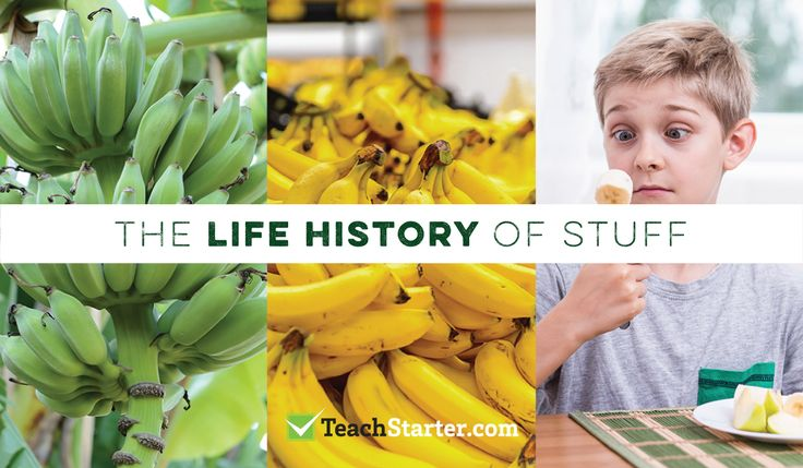 create a timeline to track the history of a food item from production to disposal - ideas and activities for teaching sustainability in the primary school classroom