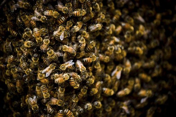 How to Get Rid of a Bee's Nest in the Ground