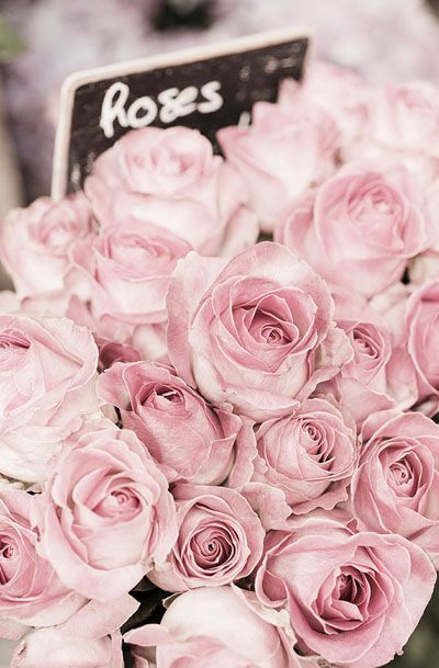 Pale Roses in Paris Flower Market, French Travel Photograph