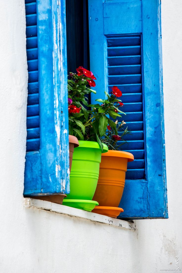 38 best colors of athens images on pinterest athens greece travel and places - Flowers native to greece a sea of color ...