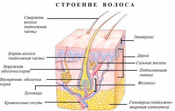 Оттеночный бальзам для волос Тоника РоКОЛОР  Отзывы