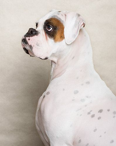 Piotr M. Organa, photographer- look at that underbite. That's a BOXER