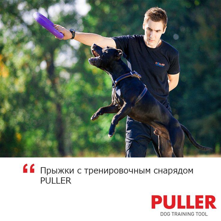Позвольте собаке в прыжке схватить PULLER, затем подайте ей второе кольцо, не выпуская из рук первого. Это упражнение развивает внимание и реакцию. Обязательно мотивируйте собаку прыгать выше и быстрее.   #puller #puller_com #пуллер #pullerупражнение