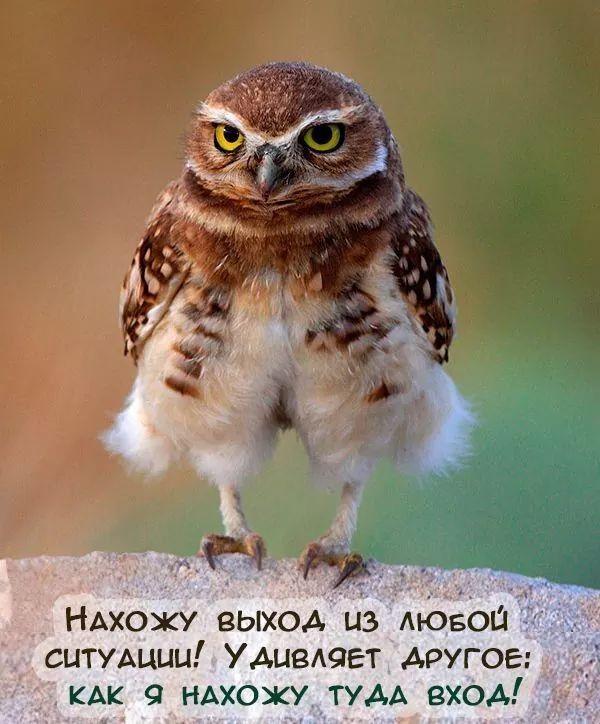 Пин от пользователя M.G на доске Цитаты   Смешные птицы, Домашние ...