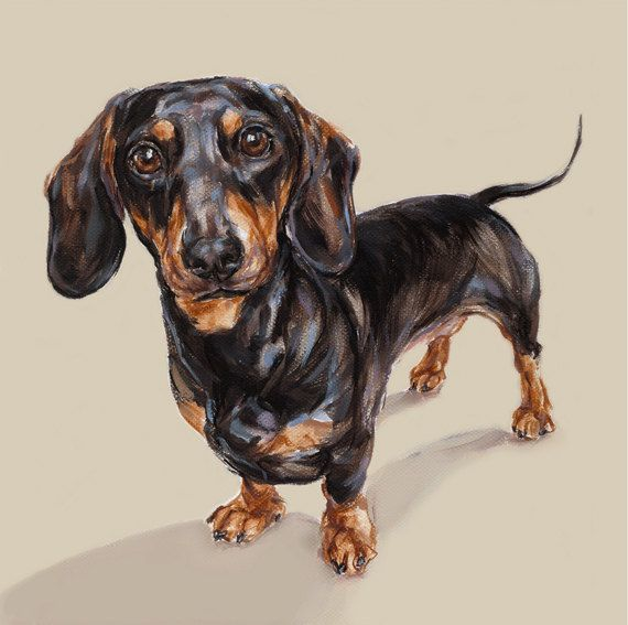 Dachshund art print Ltd Ed Collectable by paintmydog on Etsy