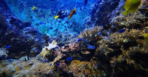 10 misteri ancora irrisolti delle profondità dell'oceano