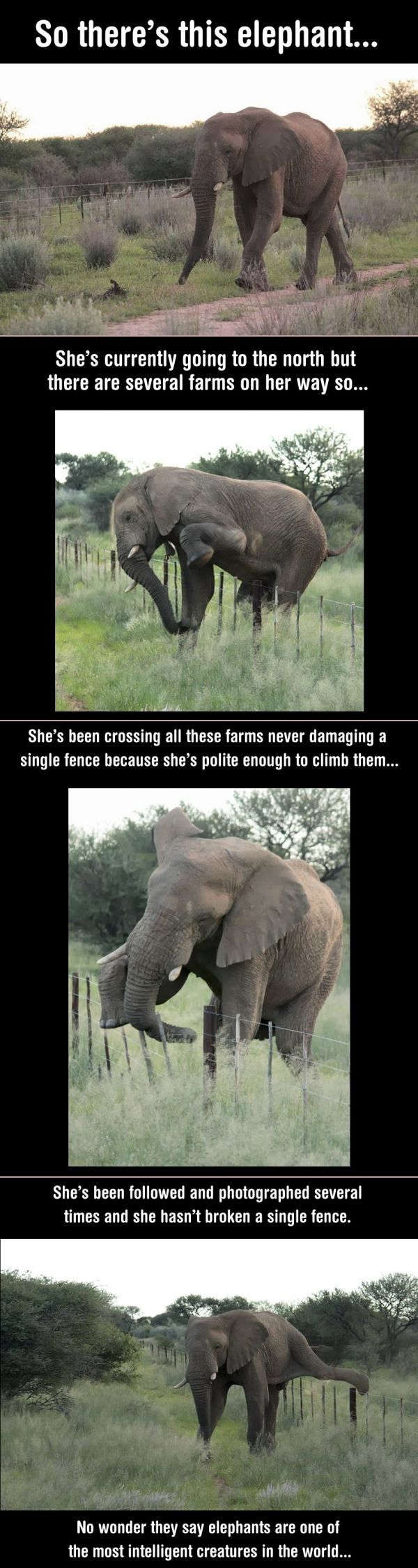 Elephant - Take note people! This elephant is smarter, and more considerate than some humans ^_^