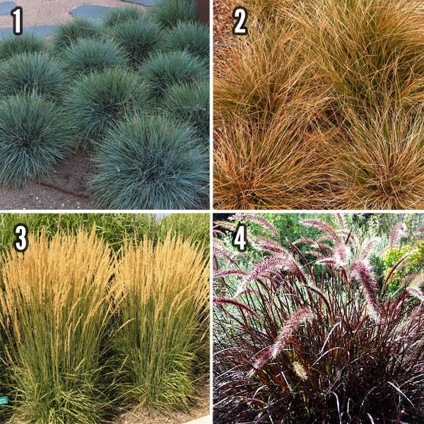Small Ornamental Trees For Kansas: 101 Best Images About California Landscapes On Pinterest