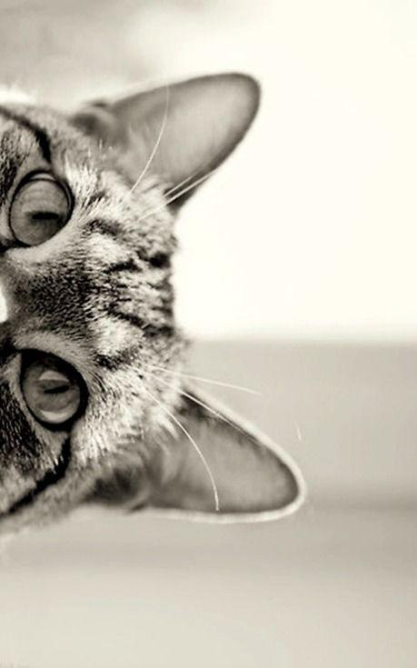 #hey #kotek #miau