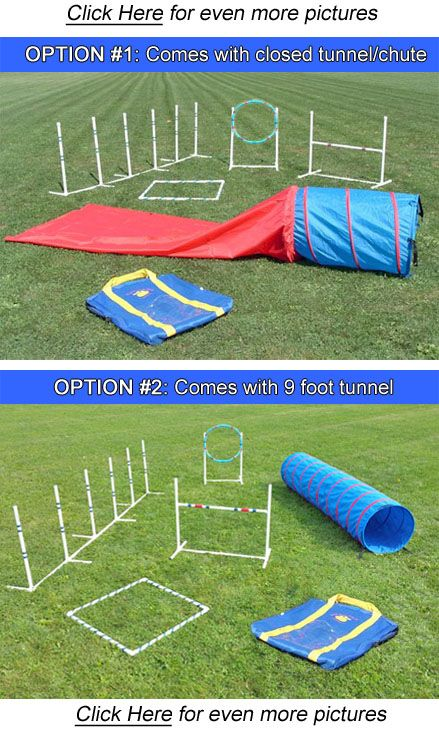 dog agility starter kit
